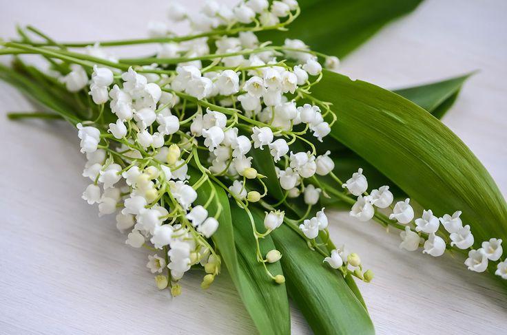 Liljekonvaljer säsong och 17 fakta alla som älskar liljekonvaljer borde känna till.