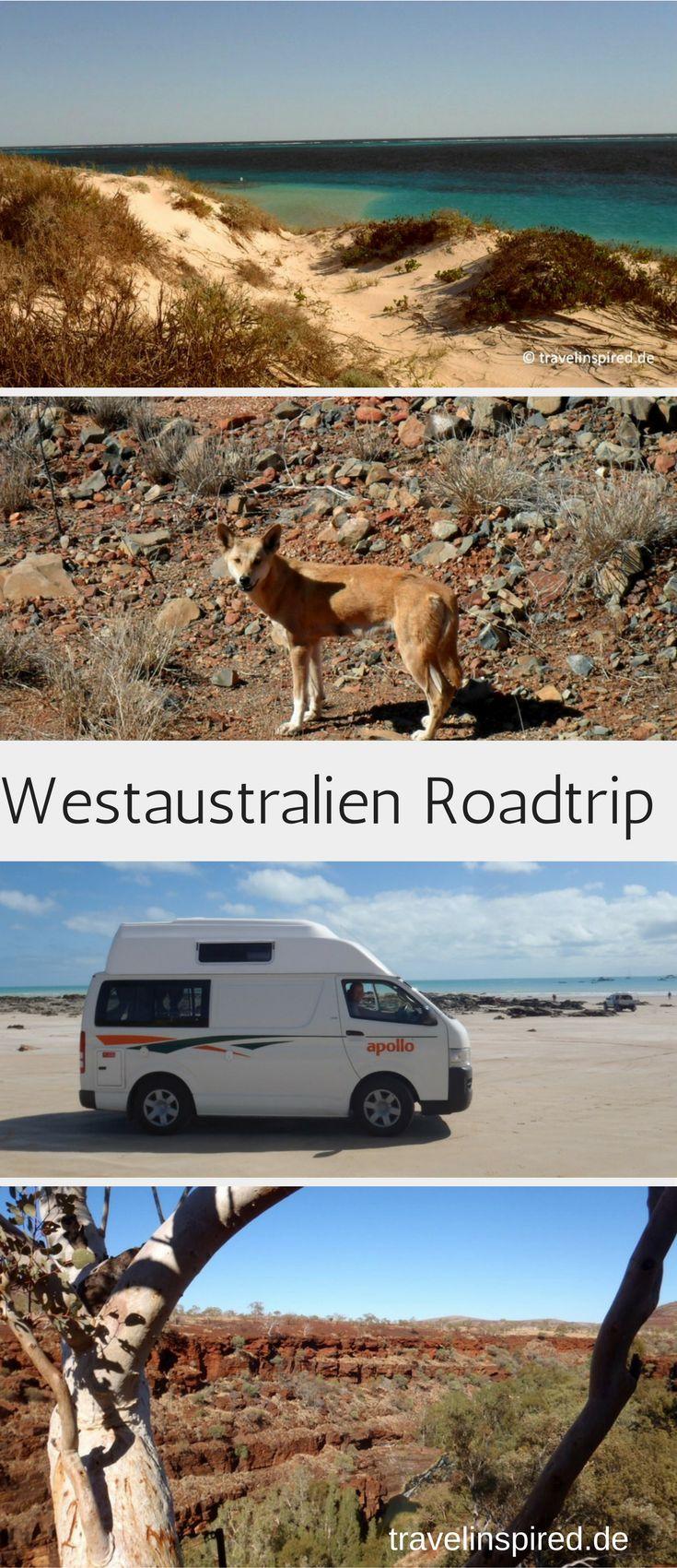 Tipps & Infos für deinen Roadtrip von Darwin nach Perth durch die Nationalparks in Westaustralien #australien #roadtrip #westaustralien #reisebericht #campervan #travelinspired #lichfield #nationalpark #nationalparks #bunglebungles #lakeargyle #mirimanationalpark #geikiegorge #karijininationalpark #broome #caperange #ningalooreef #pinnacles #monkeymia #yanchep #nambung #dingo #känguru #koala