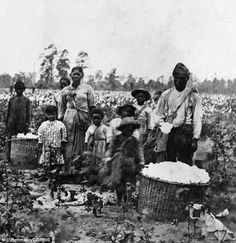 Slave Family In Cotton Field near Savannah, Georgia in 1860: A new book has shed new light on the struggles of freed slaves in the U.S. after the end of the Civil War 'The end of slavery led to hunger and death for millions of black Americans': Extraordinary claims in new book