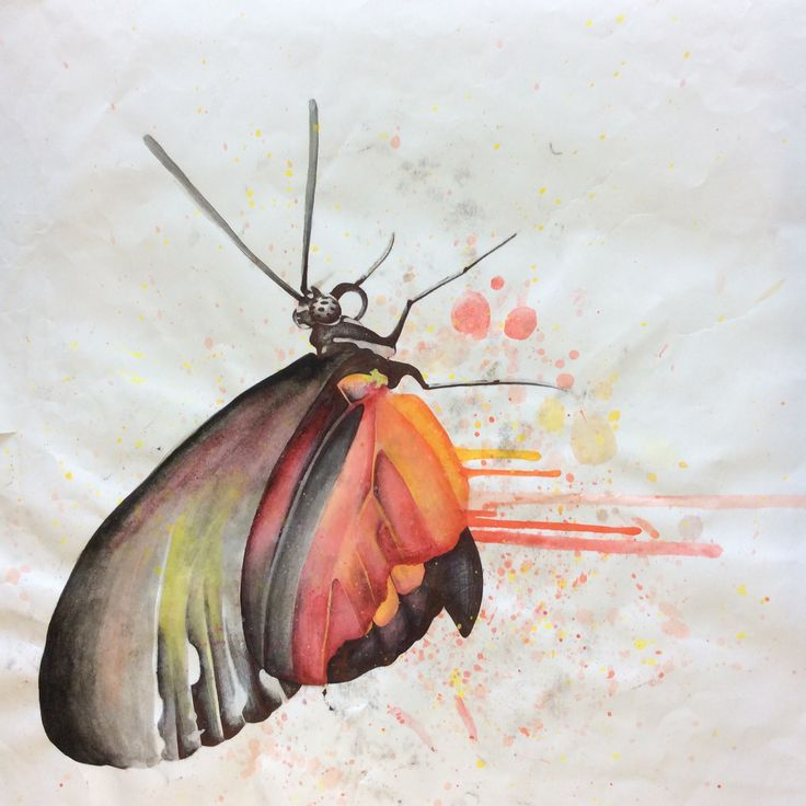 Pen and paint butterfly