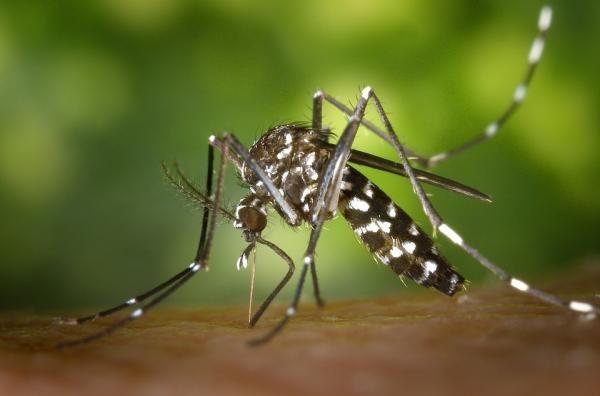 Cómo ahuyentar mosquitos en el exterior