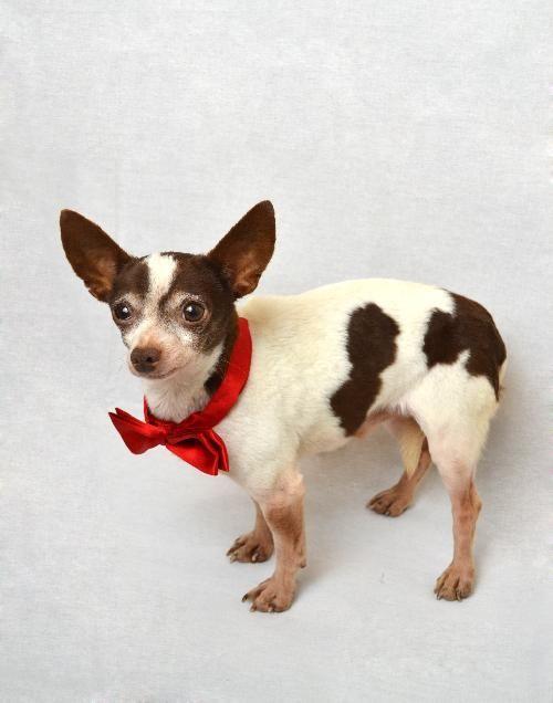 Adopt Cabo **DIAMOND DOG 75 ADOPTION FEE** on Diamond