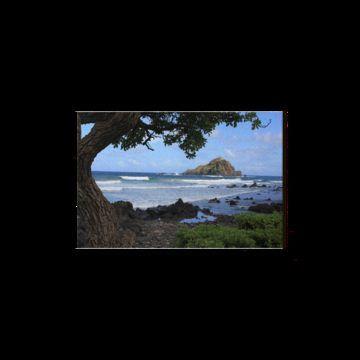 USA Hawaii Maui Road to Hana Koki Beach Baum Tree Ocean Meer Felsen Rock #beachgifts #beach #gifts #gift Ideas