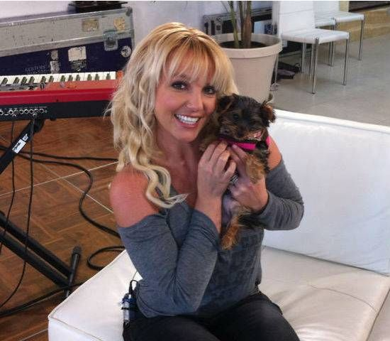 Britney Spears tweets pic of new dog Hannah