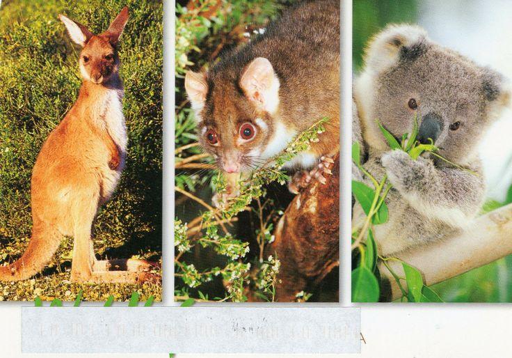 http://1.bp.blogspot.com/-aH7u_YR85q0/T_Ch8D5IXpI/AAAAAAAABPA/e1dX_fw2Q5E/s1600/australian+animals.jpg