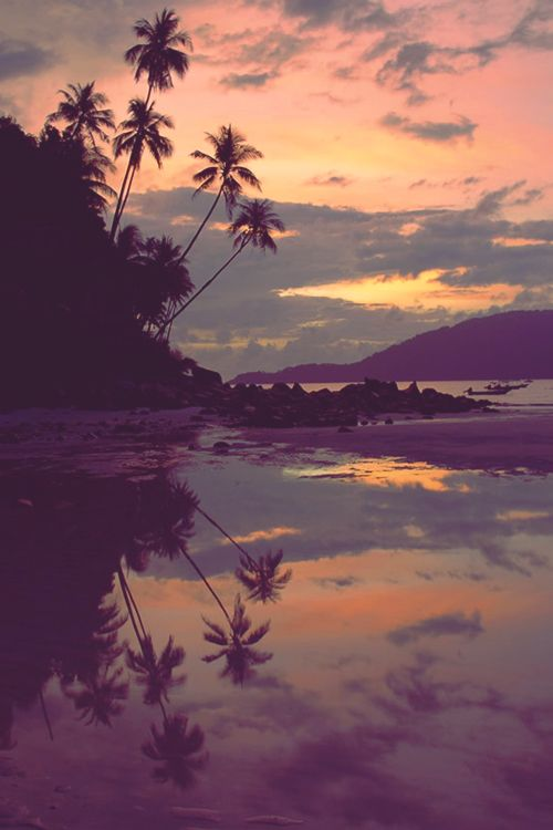 paradise | palm trees | sunset | reflection | amazing ,, take me there