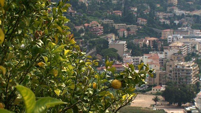 Epicerie fine - Le citron de Menton. A quelques kilomètres de Nice et de la frontière italienne, au cœur de la côte d'Azur, la petite ville de Menton. Bénéficiant d'un climat exceptionnel ensoleillé, doux et peu pluvieux, la cité est réputée pour ses jardins en escaliers qui surplombent la méditerranée. Derrière ces façades, dans ces collines, se cache le trésor de la ville : les citrons de menton.