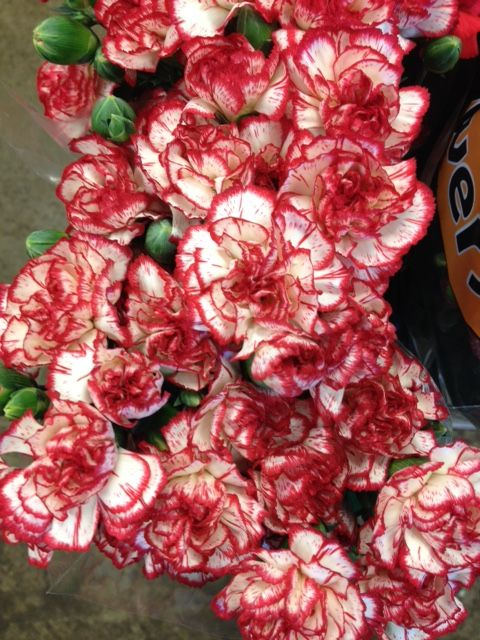 Spray Carnations 'Minuetto'...Sold in bunches of 10 stems from the Flowermonger the wholesale floral home delivery service.