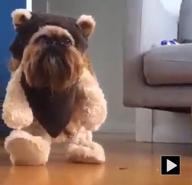 Best 25+ Funny dog costumes ideas only on Pinterest ...