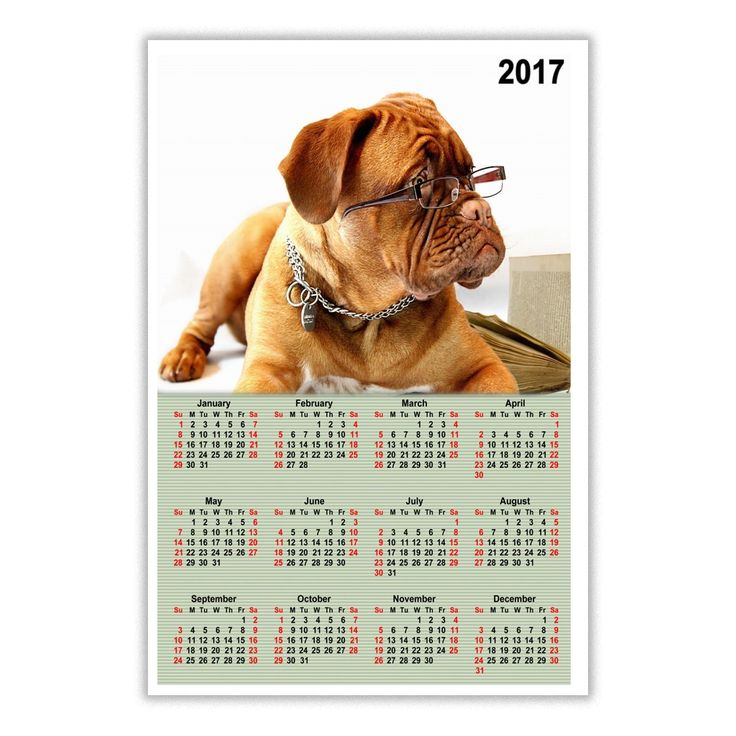 Dog Calendar Ideas : Best gift ideas images on pinterest