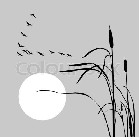 tribal duck tattoos - Google Search