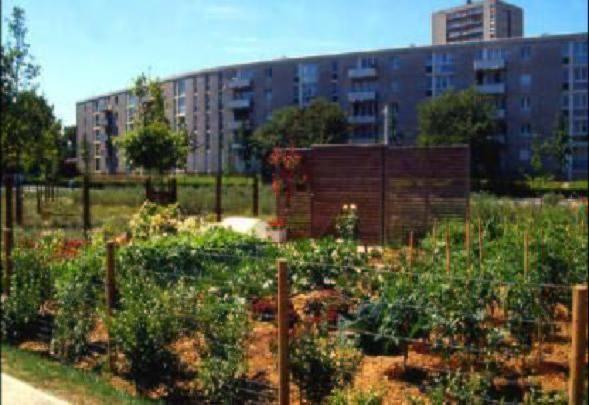 Gli orti urbani che ci salveranno dalla crisi