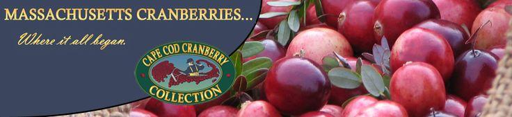 Visit Massachusetts Cranberry bogs