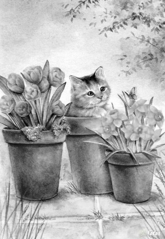 how to color grayscale coloring pages - 106 b sta bilderna om coloring pages cats p pinterest