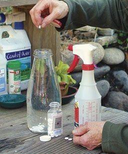 Аспирин является средством против грибков. Черные пятна, мучнистая роса, и ржавчина являются ужасным трио грибков, которые могут атаковать и уничтожать ваши растения. Ученые обнаружили, что две непокрытые таблетки аспирина (325 миллиграмм каждый), растворенные в 1 л воды и использовать в качестве опрыскивания листвы