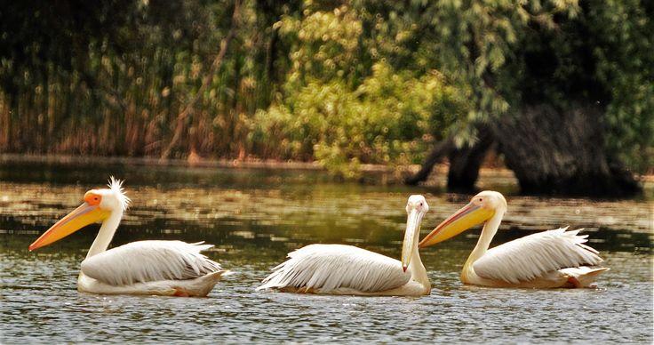 Danube Delta, Romania www.touringromania.com