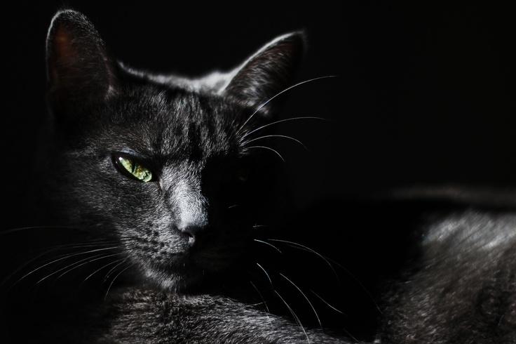 low-key cat