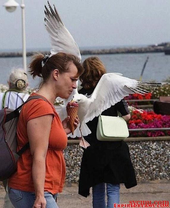 Seagull Steals Woman's Ice Cream!