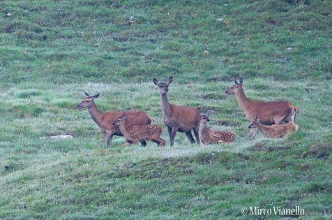 foto di Animali selvatici di Livigno.