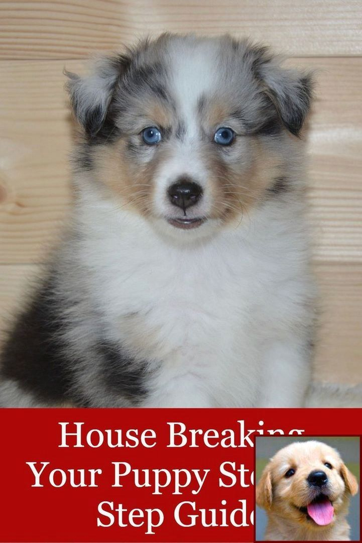 House Training A Puppy Without Crate And Dog Behavior Books