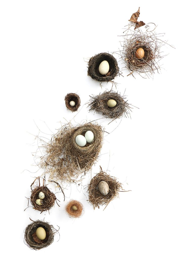 eggs and nests | STILL (mary jo hoffman)