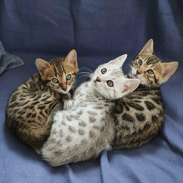 Ils sont terribles ?? Photo de: @ben_galen . . . . . #monchat #félin #mistigri #chatinstagram #felin #miaou #c… | Animaux adorables ...