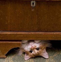 Harmony CottageHiding Places, Hello Sweetie, Kitty Cat, Funny Cat, Peek A Boos, Winter Vacations, Crazy Cat Lady, Weights Loss, Animal