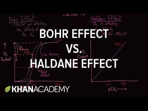 Bohr Effect vs. Haldane Effect - YouTube