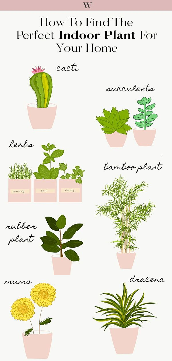 Here S How To Find The Perfect Indoor Plant For Your Home Or Apartment From Succulents Palms Cacti Herbs We Ve Got You Covered On Everything