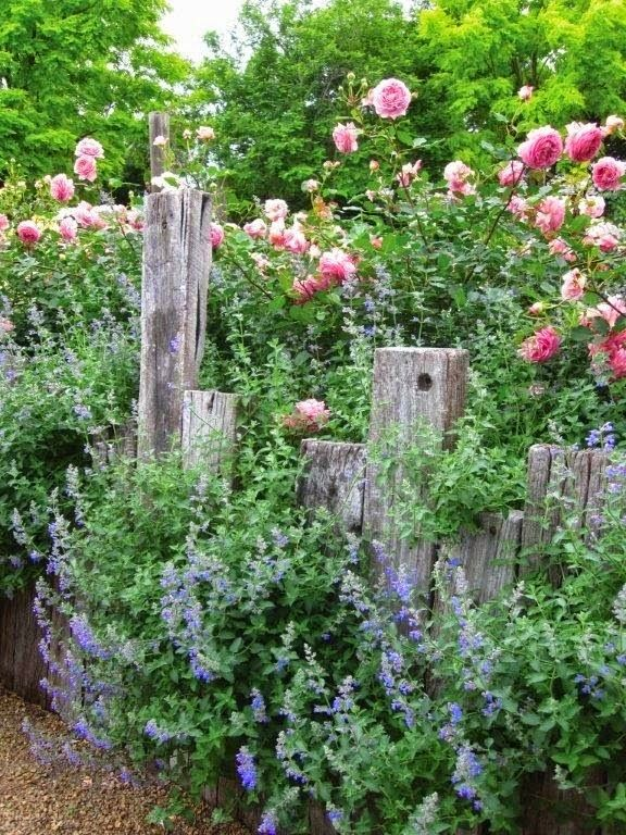 Red Flower in Country Cottage Garden | Outdoor Areas
