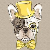 French Bulldog in Top Hat, by Vector grappige cartoon hipster Franse bulldog hond — Stockillustratie