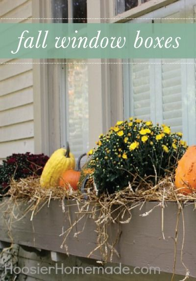 Add gourds to your window boxes this fall for some fun and festive curb appeal!