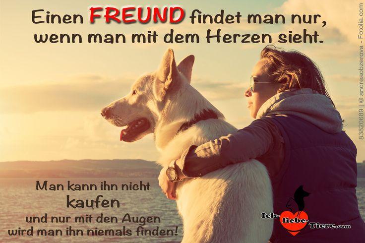 Einen Freund findet man nur, wenn man mit dem Herzen sieht. Man kann ihn nicht kaufen, und nur mit den Augen wird man ihn niemals finden! >> http://www.ich-liebe-tiere.com/ <<