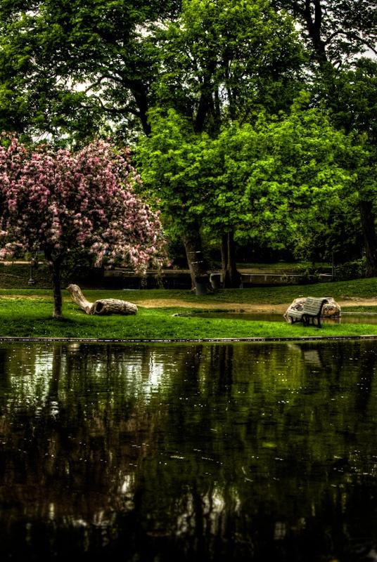 Westmount Park - le printemps arrive ici  aussi
