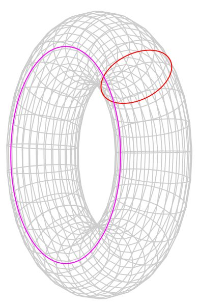 Poincaré conjecture | Homology cycles on a torus | Neither of the two colored loops on this torus can be continuously tightened to a point. A torus is not homeomorphic to a sphere. Radius of magenta circle is and radius of red circle is.