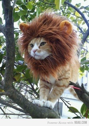 King of the Jungle (er...tree) lion cat costume