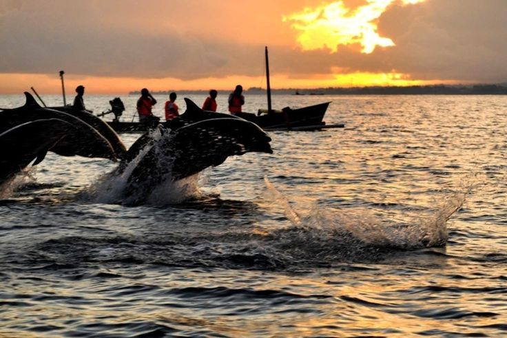 Best things to Do for Honeymoon in Bali. #Bali #Dolphins #Dolphinshow #Lovina #Beach