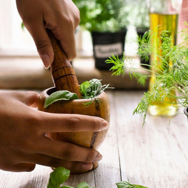 O manjericão está associado a uma dieta saudável, veja quais os benefícios que o consumo dessa planta traz para a saúde e beleza