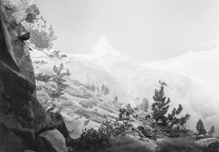 Hiroshi Sugimoto Birds of The Alps, 2012 stampa ai sali d'argento, 119,5x171,5 cm courtesy l'artista