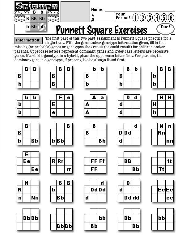 Worksheets About Punnett Squares | Punnett Square Exercises 1