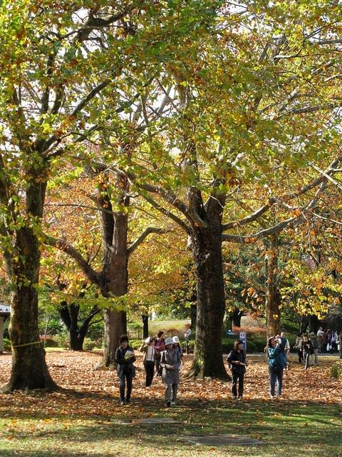 Emperor Hirohito Memorial Park in Tokyo Japan