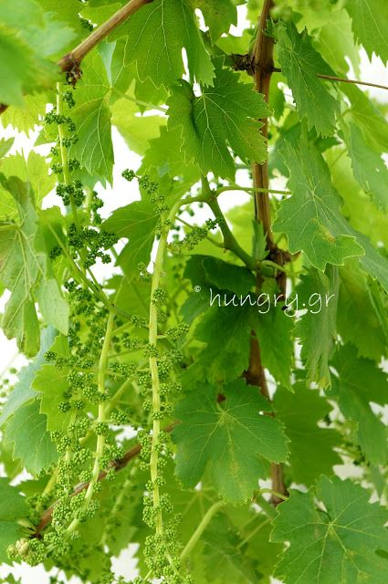 Kitchen Stories: Vine Leaves Maintenance 2-DIY