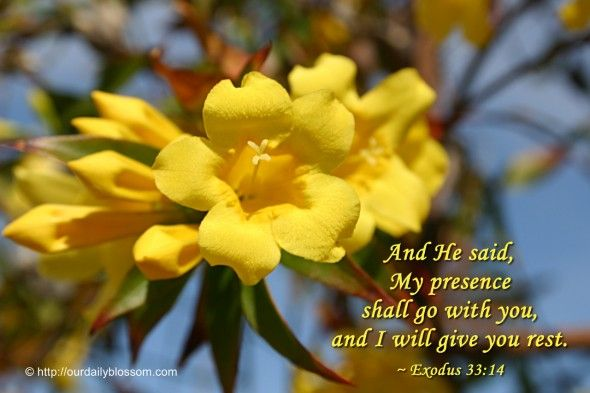 Bible Verse – Exodus 33:14 | Our Daily Blossom