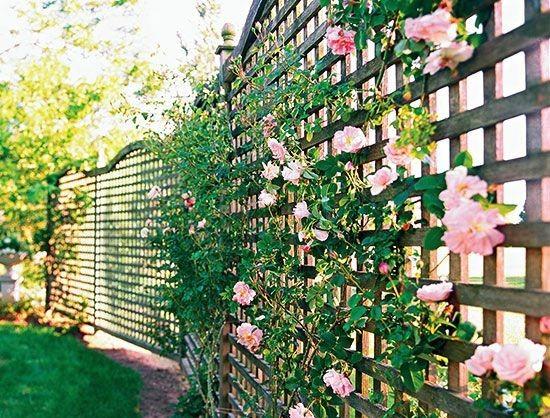 4069 Best Images About Backyard Paradise On Pinterest