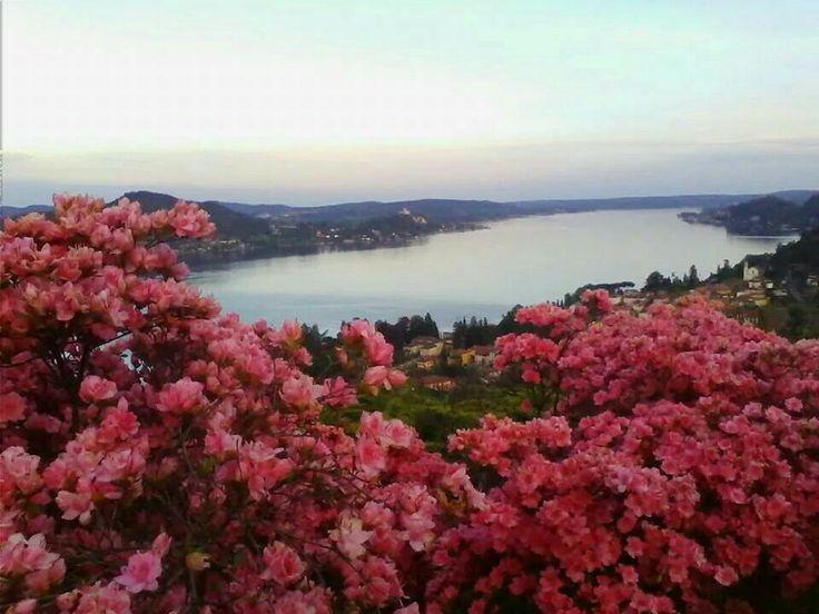 #Nebbiuno fiorita ( #Novara #Piedmont #Italy ) il lago in fiore questo weekend http://ilvergante.com/2014/04/24/meina-in-fiore-sul-lago-maggiore-arriva-la-primavera/