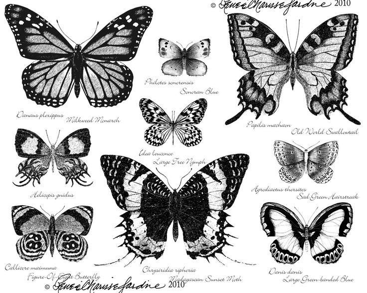 Butterfly Black and White Hand Signed Glicee by StudioJardine