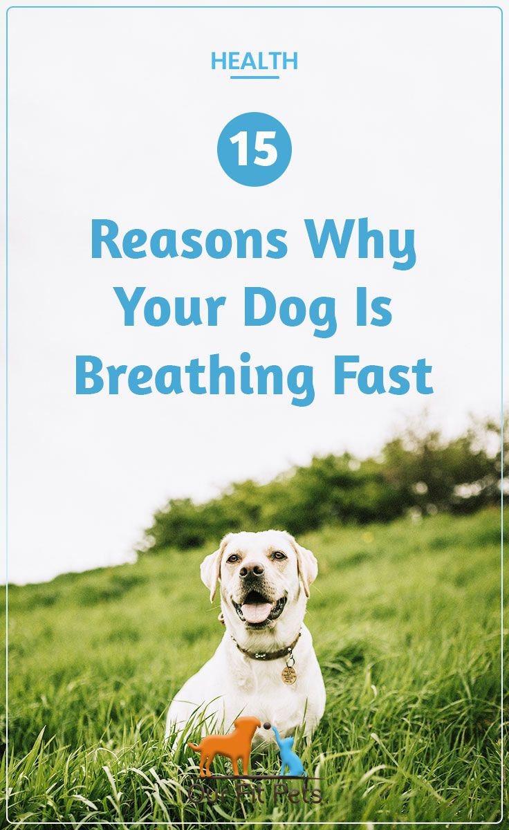 15 Reasons Why Your Dog Is Breathing Fast Our Fit Pets Dog Breath Dogs Dog Pants