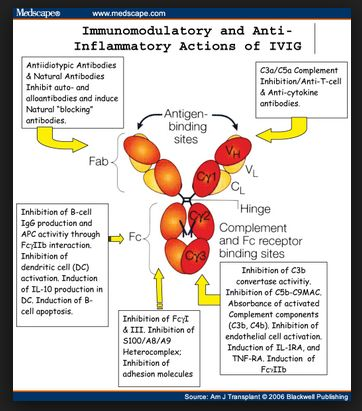 IVIg is a pooled human Immunoglobulin G (IgG) preparation obtained by cold ethanol extraction from the plasma of thousands of healthy blood donors. It is already in use as a treatment for a number of immune deficiency disorders and other syndromes. IVIg contains natural antibodies, including antiamyloid antibodies.