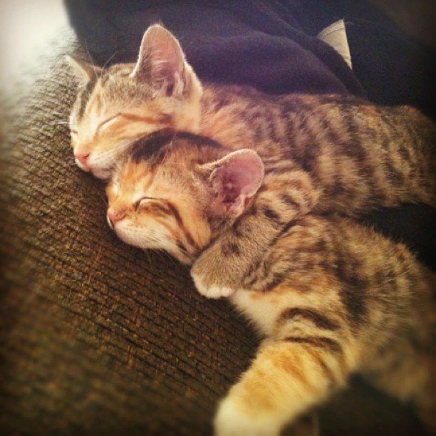 kittens. Nap time for the lil ones. Mama finally got them to sleep.