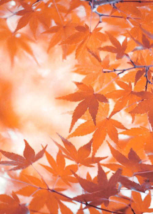 autumn leavesAutumn Background
